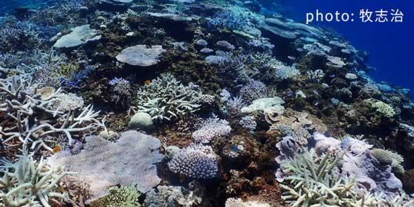 サンゴとサンゴ礁生態系の現状